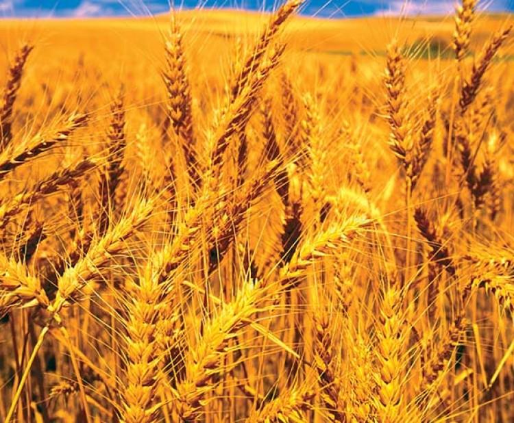 किन आन्दोलन गरिरहेछन् उखु किसान, यस्तो छ भित्री कुरो_img