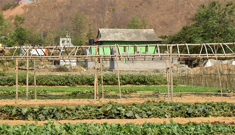यसकारण कृषिजन्य उत्पादन नेपालमा बढ्न सकेन_img