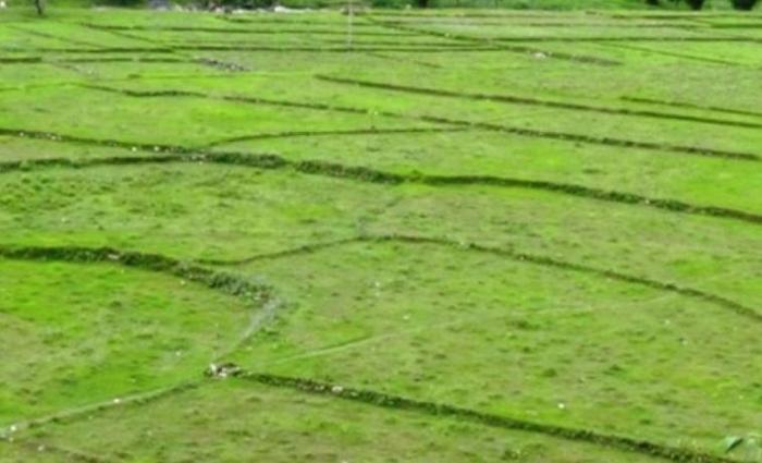बाँझो जग्गामा खेती गर्नेलाई अनुदान : कोदोखेती गर्नेलाई प्रतिरोपनी २ हजार, धानखेतीलाई  ५ हजार_img