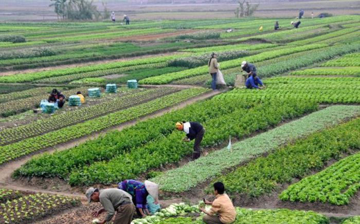 कृषि सम्बन्धी सरकारी कार्यक्रम कागजमा मात्रै सीमित