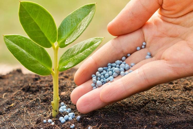 कृषि मन्त्रालयको प्राथमिकतामा रासायनिक मल, ३० प्रतिशत बजेट छुट्याउने
