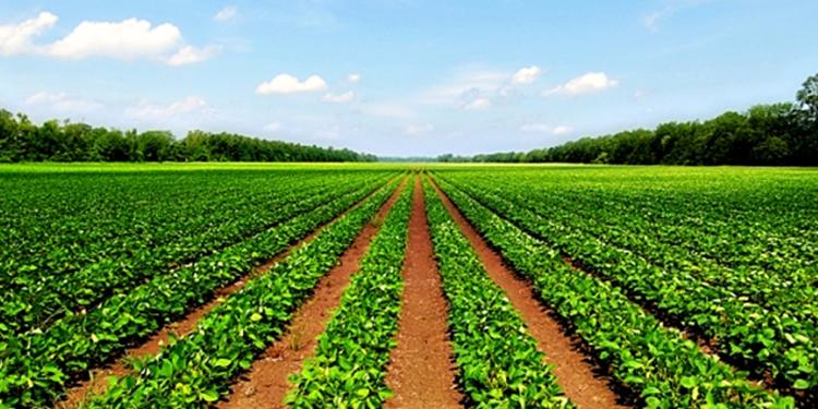 विस्तृत अध्ययन नगरी कृषिमा विदेशी लगानी खुला गर्नु हुन्न : निजी क्षेत्र
