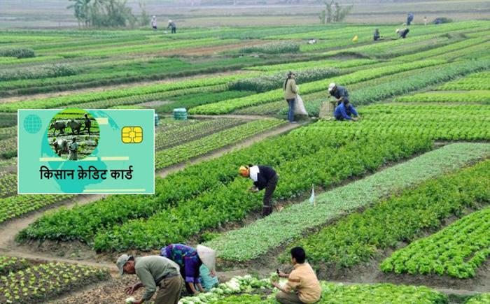 कृषि बैंकद्वारा किसान क्रेडिट कार्ड वितरण शुरू, मन्त्रालय भने बल्ल कृषक सूचीकरणमा जुट्दै