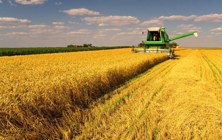 चीनले रच्यो अन्नबाली उत्पादनमा कीर्तिमान, हरेक नागरिकले उत्पादन गरे ४७० किलो अन्न