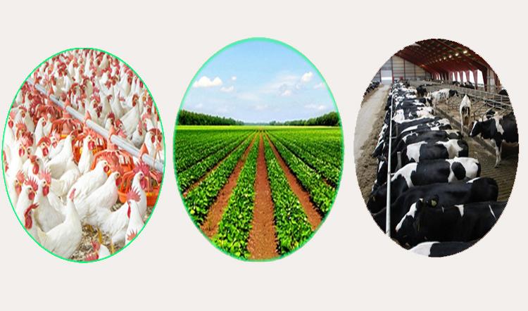 साढे ५ अर्ब लगानीमा २१ वटा कृषिजन्य उद्योग खुल्दै, कुन उद्योगमा कसको लगानी ?